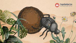 Sự tích con bọ hung